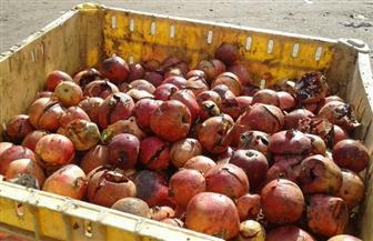 إعدام أكثر من 27 طن فاكهة فاسدة بالعاشر من رمضان