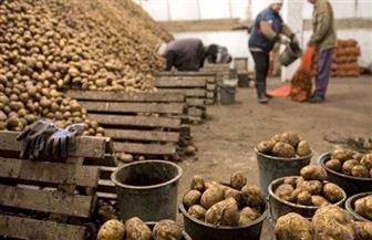 نمو الصادرات الزراعية إلى 4.4 مليون طن تتصدرها الموالح والبطاطس والبصل