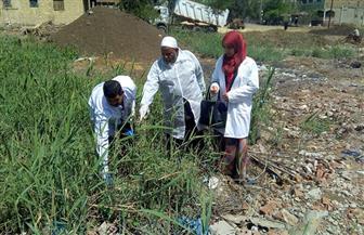 مركز قويسنا يقوم بإجراءات احترازية لمواجهة ظاهرة انتشار الزواحف بقرية شبرا بخوم| صور