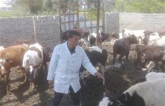في اليوم العالمي له.. تعرف على ٩ أدوار مهمة للطبيب البيطري غير علاج الحيوانات