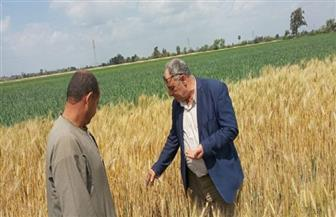 زراعة الغربية: حصاد 28 ألف فدان قمح من محصول الموسم الجديد حتى الآن