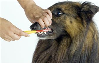 لا تنظف أسنان الحيوانات الأليفة بمعجون الأسنان العادي