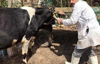 """""""بيطري كفر الشيخ"""":  تحصين 16791 حيوانا ضمن الحملة القومية للتحصين ضد مرض جدري الضأن"""