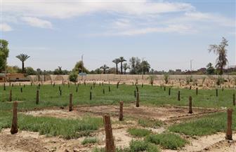 محافظ قنا: زراعة 3 آلاف نخلة بارحي ومجدول بمشروعات الأمن الغذائي | صور