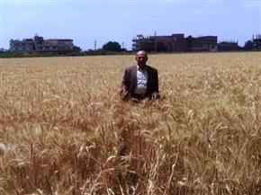 زراعة الشرقية: توريد 417 ألف طن قمح حتى اليوم