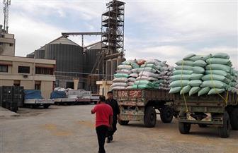 زراعة القليوبية: حصاد 36 ألف فدان قمح وتوريد 86 طنا للصوامع حتى الآن