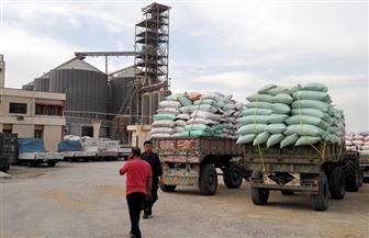 صوامع وشون المنيا تستقبل 239 ألف طن من القمح