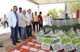 محافظ قنا يتفقد مشروع الأمن الغذائي بقرية المعنا