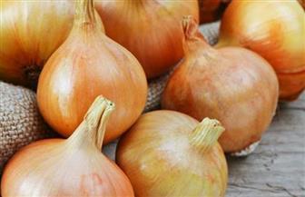 الزراعة تنفي عدم صلاحية محصول البصل للاستهلاك الآدمي نتيجة إصابته ببكتيريا ضارة
