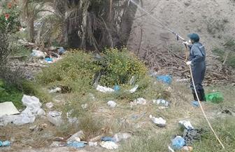 بدء حملة شاملة لمقاومة الحشرات والقوارض في الإسكندرية |صور