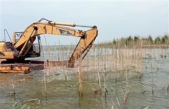حملة لإزالة التعديات على محمية بحيرة البرلس | صور