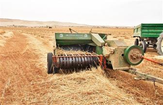 توريد 116820 طنا من محصول القمح فى الفيوم