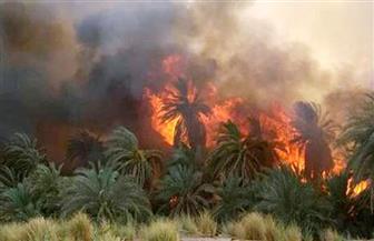 حريق هائل يلتهم أشجار النخيل بأسنا جنوب الأقصر