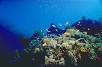 اكتشاف 30 نوعا جديدا من الأحياء البحرية في محمية جالاباجوس بالإكوادور