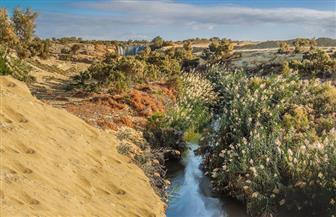"""""""البيئة"""" تتابع الوضع بالمحميات الطبيعية بعد التدهور الأحوال الجوية"""