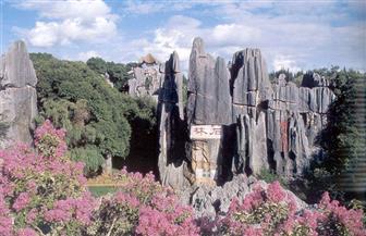 """رحلة الأحلام إلى """"غابة الصخور"""" عمرها 490 مليون عام   فيديو"""