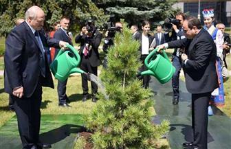 الرئيس يشارك رئيس بيلاروسيا في زرع شجرة صداقة بحديقة القصر الرئاسي بمينسك | صور