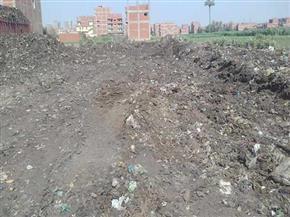 رفع 12 ألف طن قمامة ومخلفات من مقلب الفدان في منيا القمح