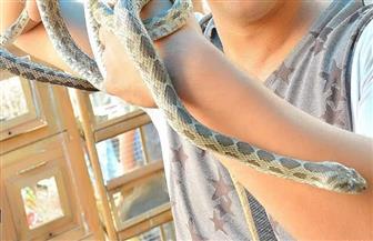 حتى لا تتكرر مشكلات الصيف الماضي.. نصائح لتحصين بيتك من الثعابين
