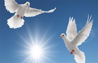 مفاتيح الجنة.. إفشاء السلام | فيديو