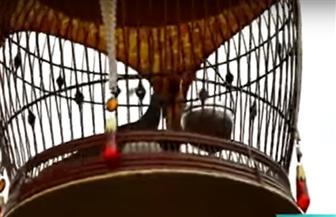 مسابقة غناء للطيور في سنغافورة | فيديو