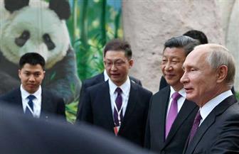 فى حضور بوتين.. الرئيس الصينى يهدى حديقة حيوان موسكو اثنين من دببة الباندا |  صور