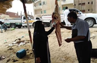تحرير 9 محاضر بالسوق الأسبوعية في بئر العبد | صور