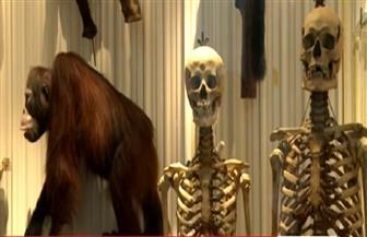 جمجمة تعيد تاريخ البشرية لنحو 210 آلاف سنة   فيديو