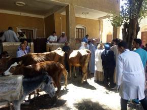 محافظ أسيوط: تنظيم قوافل بيطرية تستهدف 20 قرية لعلاج الحيوانات| صور