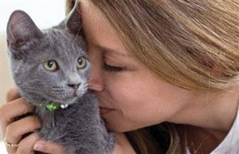 """باحثون: """"القطط"""" قد تساعد يومًا ما في علاج مرضى الكلى المزمنة"""