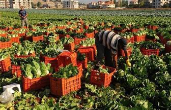 """""""الزراعة"""" تقدم نصائح للمزارعين للتعامل مع موجات الطقس الحار"""