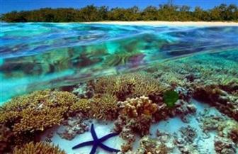 تجارب على شعاب مرجانية في الحاجز العظيم بأستراليا