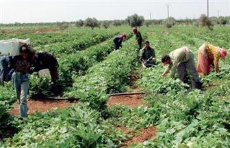 """""""الزراعة"""" تناشد من رسي عليهم المزاد استكمال الإجراءات لاستلام أراضيهم بمشروع تنمية سيناء"""