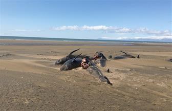 سواحل أيسلندا تتحول إلى أكبر مقبرة جماعية للحيتان | صور