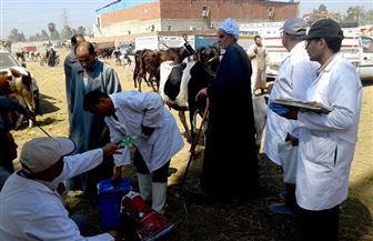 تحصين 17610 ماشية ضد مرض طاعون المجترات الصغيرة بكفرالشيخ