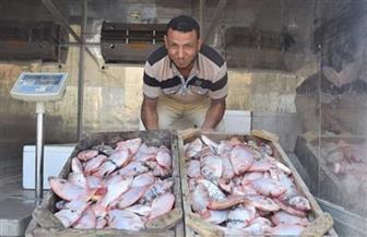 طرح أسماك بأسعار مخفضة للمواطنين بالغردقة | صور