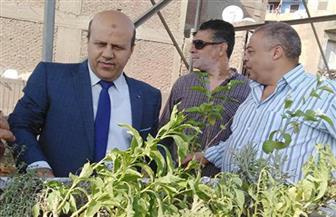 رئيس حي باب الشعرية يرأس لجنة الأسواق ويبدأ في زراعة أسطح العقارات | صور