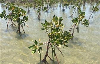 خليفة: التوسع في زراعة أشجار القندل لحماية شواطئ البحر الأحمر من تغير المناخ