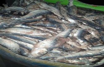 ضبط أكثر من 5 أطنان أسماك مدخنة فاسدة داخل ثلاجة بدون ترخيص بالقاهرة