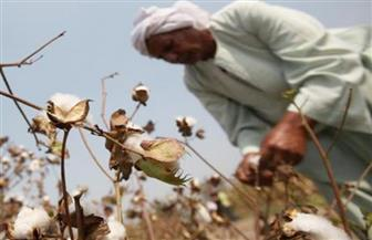 """""""قطاع الأعمال"""" تعقد لقاء مع مزارعي القطن في الفيوم وبني سويف"""