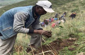 إثيوبيا تغرس ربع مليار شجرة في 12 ساعة