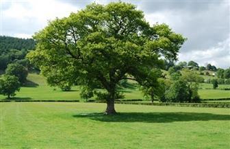 دراسة: الأشجار هي الأفضل لإنقاذ المناخ