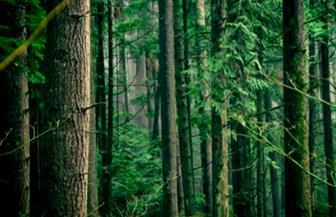 حل أزمة المناخ بزراعة تريليون شجرة | فيديو