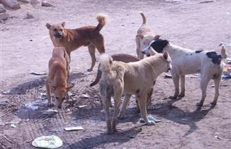"""كلب ضال يعقر 8 أشخاص بينهم 5 أطفال في """"الحلفاية بحري"""" في قنا"""