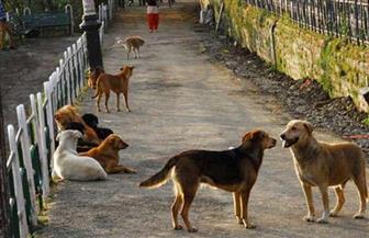 """استجابة لـ""""بوابة الأهرام"""".. الزراعة: لا وجود لداء """"اللشمانيا"""" بين الكلاب.. وكلام أستاذ البيطري غير صحيح"""