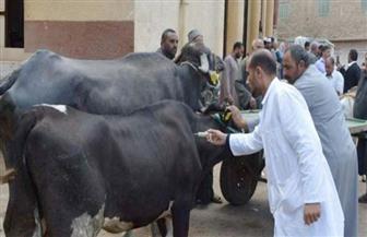 تحصين 335 ألف رأس ماشية ضد الحمى القلاعية في البحيرة