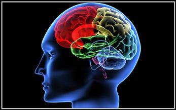 ترجمة إشارات المخ إلى لغة