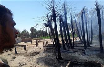 حريق هائل يلتهم عددا من المنازل والماشية بالأقصر | صور