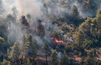 4 أيام من اللهب و1000 هكتار من الصنوبر.. حصاد حريق الغابات في اليونان | صور
