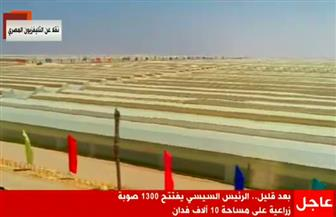 بث مباشر.. الرئيس السيسي يفتتح مشروعات الصوب الزراعية
